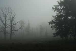 haunted_forest__-small